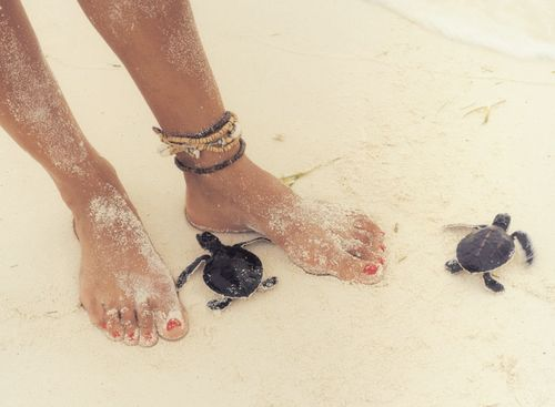 I want to hang on the beach with baby turtles all summer
