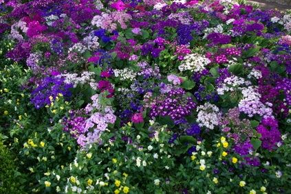 Perennial flowering ground covers for Perennial ground cover plants for sun