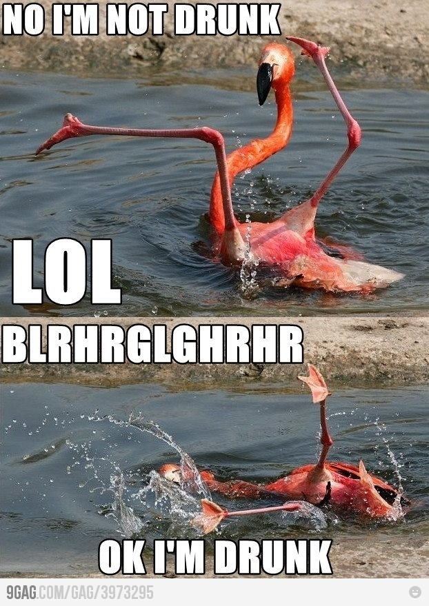 NO I'M NOT DRUNK flamingo