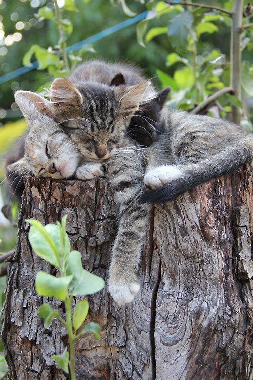 Nap time for little kittens