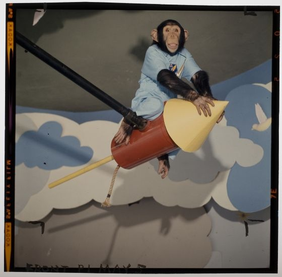 Jack Gould, Untitled (chimp riding on fake rocket), 1963, Harvard Art Museums/Fogg Museum.