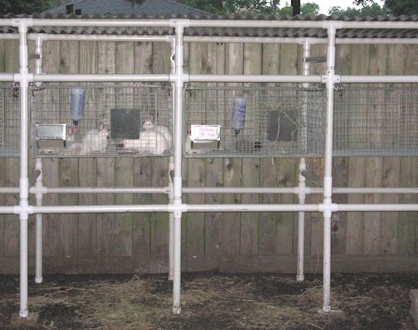 Pin by thomas case on small farm pinterest for Pvc rabbit cage