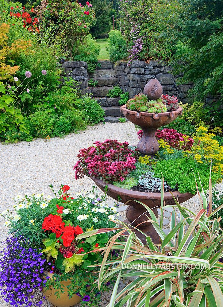 Succulent Container Garden Ideas Photograph succulent cont