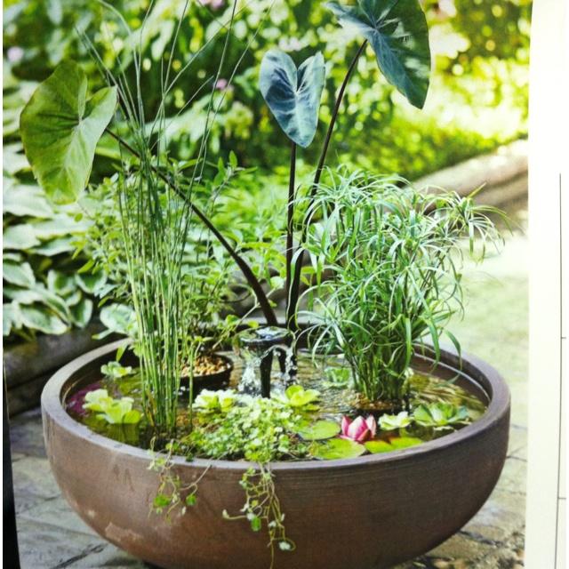 Container Water Garden Garden Stuff Pinterest