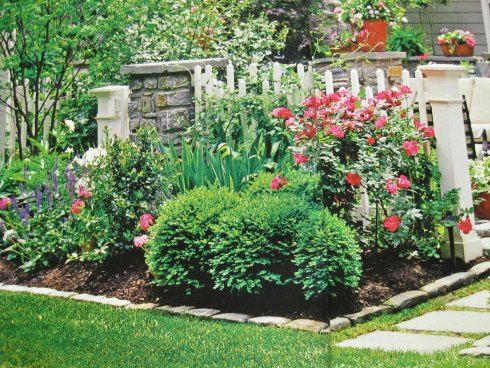 ball shaped dwarf boxwood bushes, pink peoni and blue salvia with knockout roses.