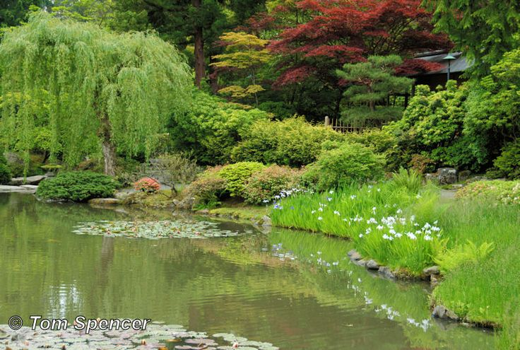 Seattle japanese tea garden amazing planet pinterest for Japanese pond garden