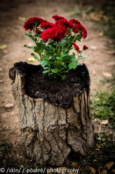 Flower pots made out of tree trunks, he burns out the stump. All Natural <3