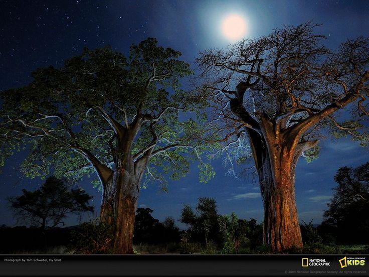 African moon.... Trees Pinterest