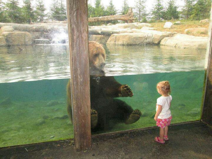 Columbus Zoo And Aquarium Animals Pinterest