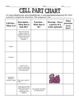 ... Cell Part Chart Worksheet on Organelles And Their Functions Worksheet