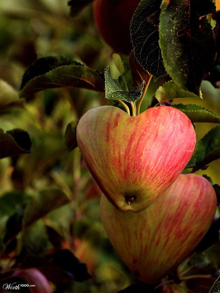 Apple from the Garden of Eden