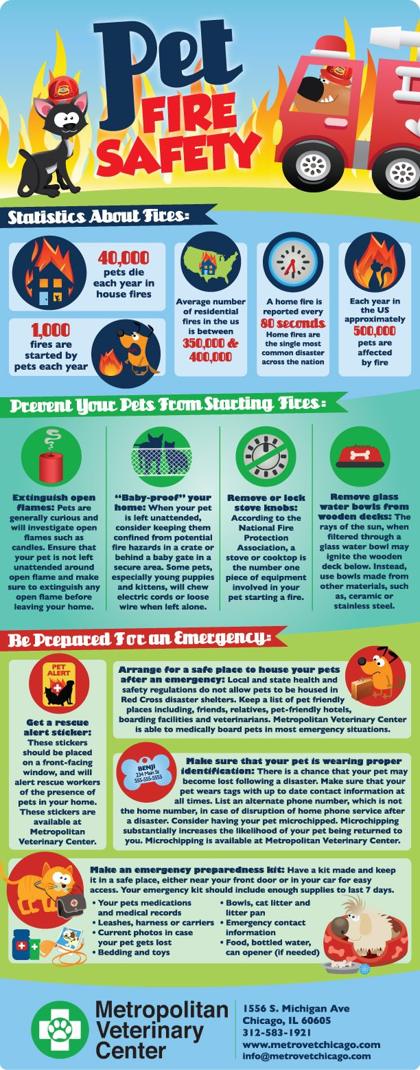 Pet Fire Safety Tips Infographic Pets Pinterest