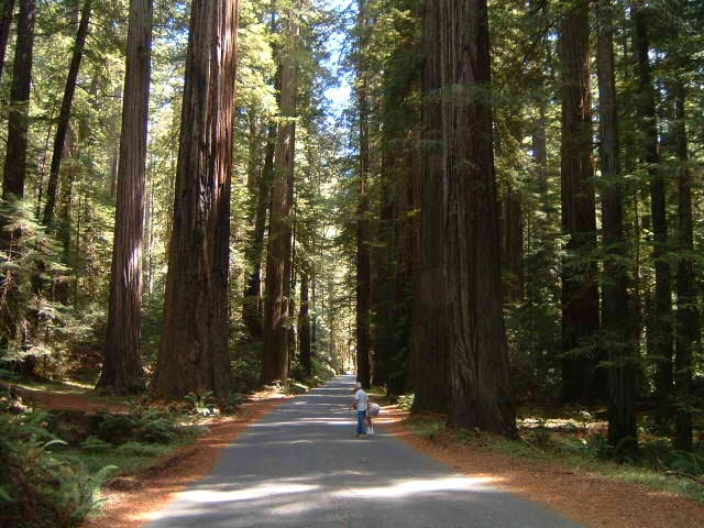Redwood park san francisco been there done that for Buy reclaimed wood san francisco