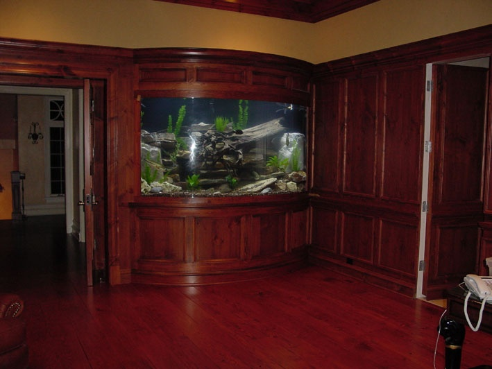 Built in aquarium aquariums fish tanks ponds pinterest for Built in fish tank