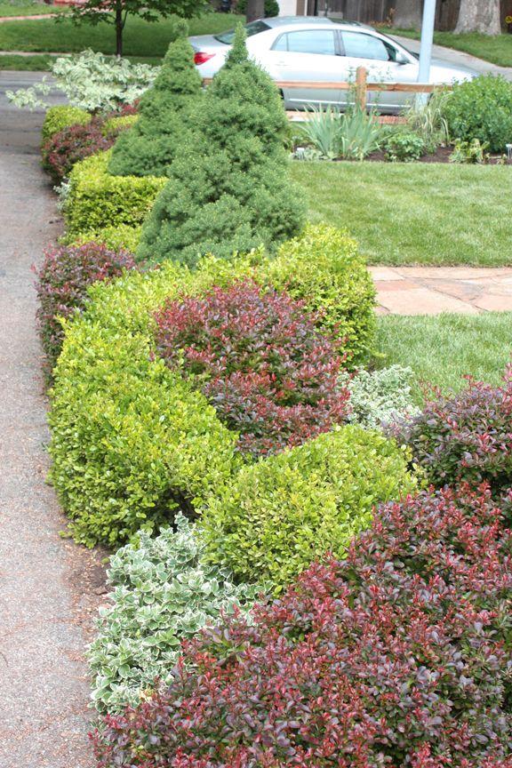 Barberry boxwood euonymous knot hedge gardens pinterest for Blackbird designs english garden