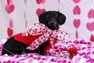 valentine's day part 2 online