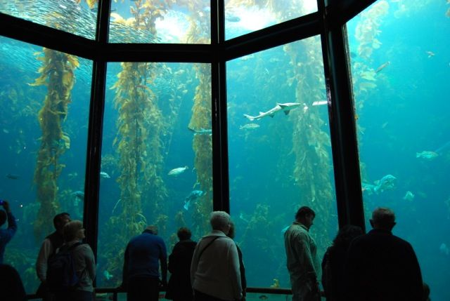 the best aquariums in the united states one dayyy