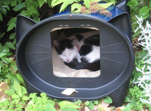 KatKabin outdoor cat house