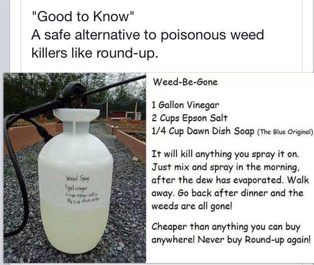 Safe Weed Killer Garden Pinterest