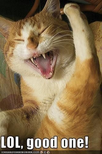 Cat Laughing Hysterically | Laughter is the best medicine | Pinterest