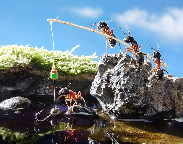 Andrey Pavlov's amazing fantasy photos of ants