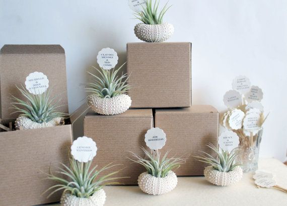 Wedding Gift Ideas For USD300 : wedding place cards // air plant party favors by peacocktaco, USD300.00