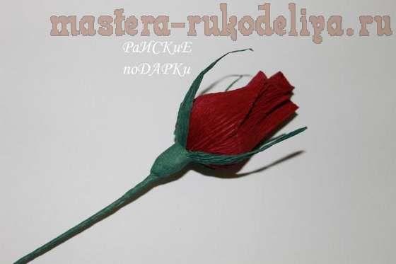 Роза 23
