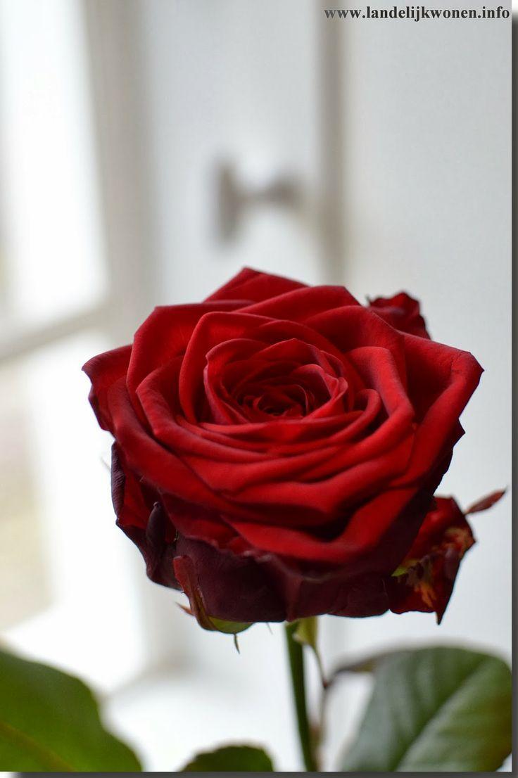 Landelijk Wonen Red Rose