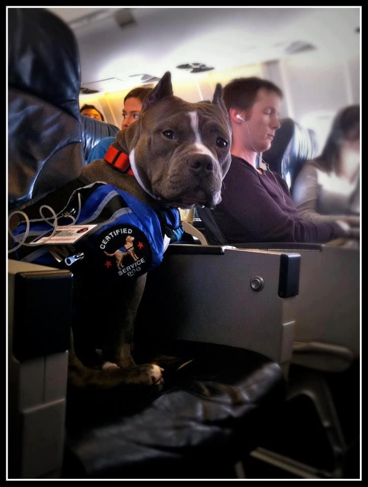 Can You Take A Therapy Dog On A Plane