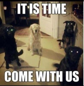Dogs.... (•_•) | Haha... Funny | Pinterest