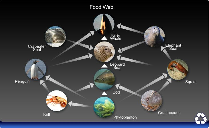 marine science food web A marine food web is shown in the diagram below  d vitamins added by food manufacturers page 10 food webs quiz 35 use the diagram below to answer the question.