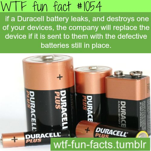 MORE OF WTF-FUN-FACTS are coming HERE  funny
