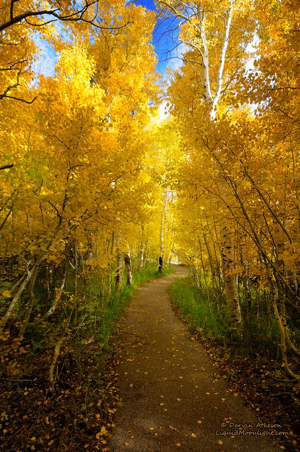 "The Golden Path by Darvin Atkeson on 500px  Oct. 15, 2011  ""The path follows the western shore or Silver Lake along the June Lake Loop in the Eastern Sierra Nevada Mountain Range."""