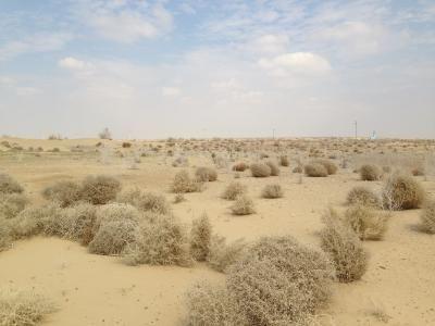 Kyzylkum DesertKyzylkum Desert