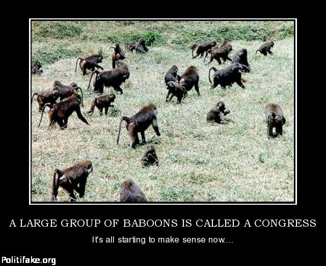 What Is A Group Of Baboons Called 58
