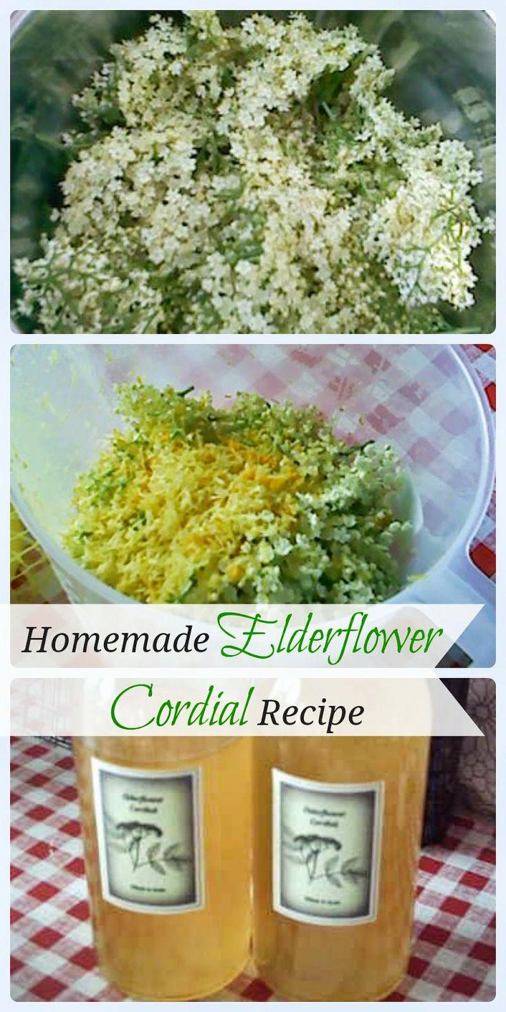 Homemade Elderflower Cordial Recipe | foraging and food gifts | Pinte ...