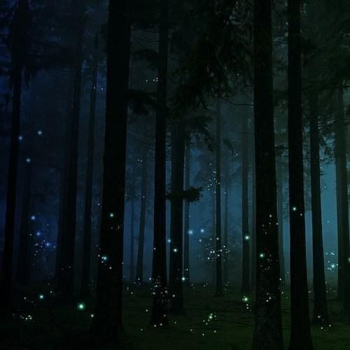 Firefly Forest in England.