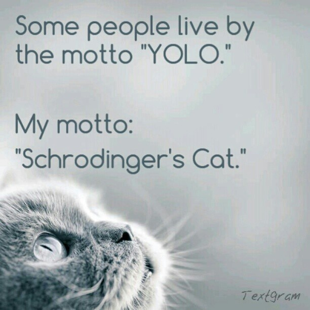 Schrodinger's Cat | The Cat's Meow | Pinterest