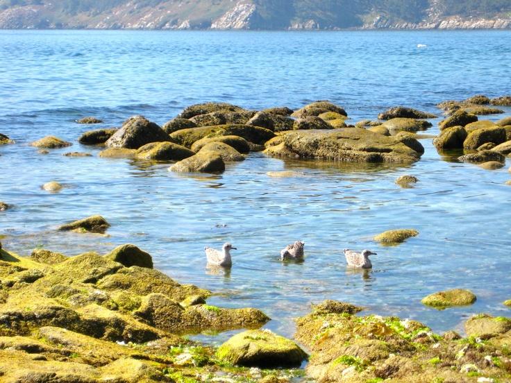 Islas Cies, Vigo,Spain  I love Galicia  Pinterest