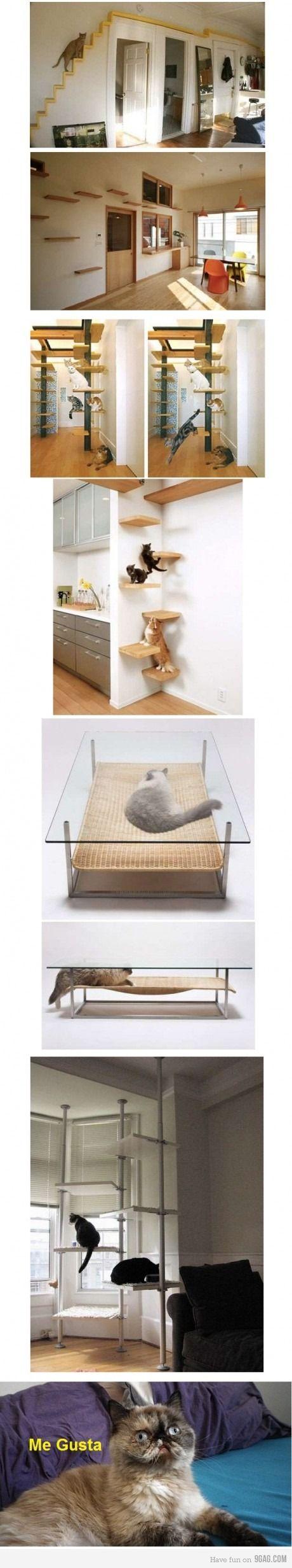 Cat home
