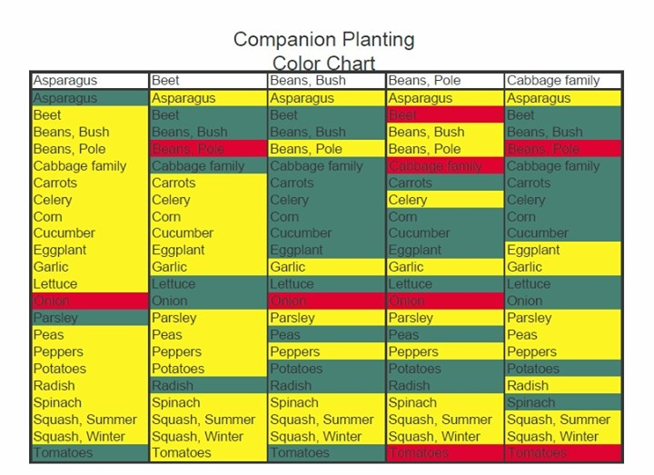 Companion planting chart gardening outdoors pinterest - Companion planting ...