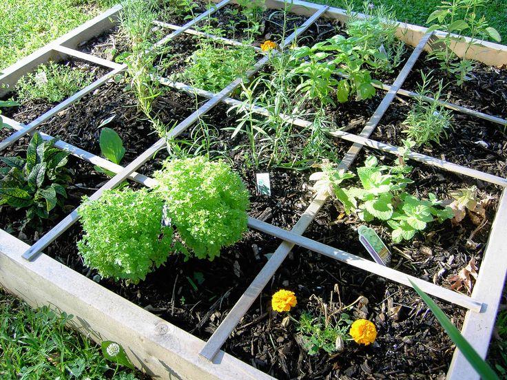 Organic Gardening | Photo Friday: Scenes from My Organic Garden