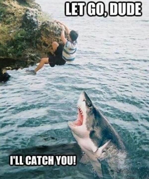 Misunderstood shark meme
