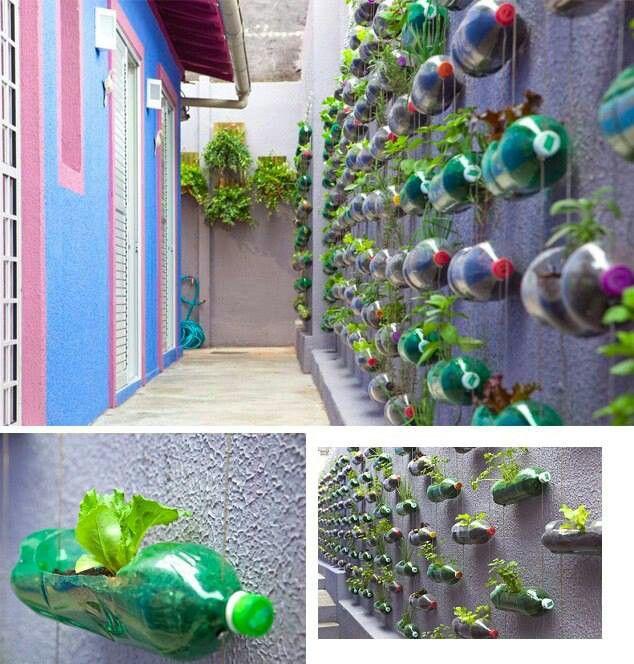 Gardening using plastic bottles eylf pinterest - Plastic bottles for gardening ...