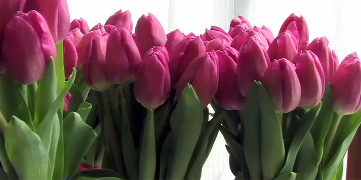 Found on mcnealvideo squarespace comHot Pink Tulip Bouquets