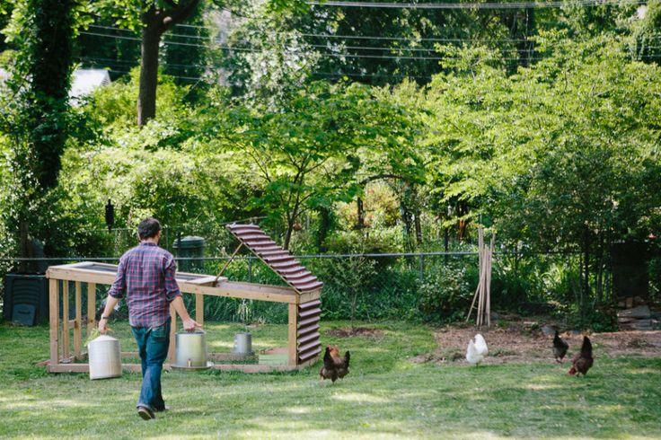 Urban Backyard Chickens :  urban dwellings can enjoy chickens Urban Homesteads Back Yard