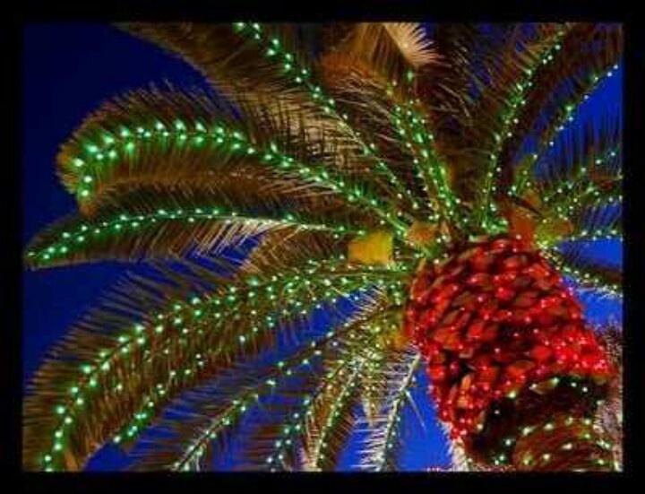 palm tree christmas lights wallpaper - photo #12