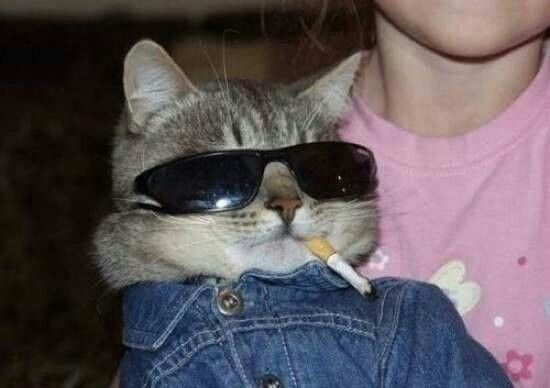 I Like Cat Cat Cat Cat