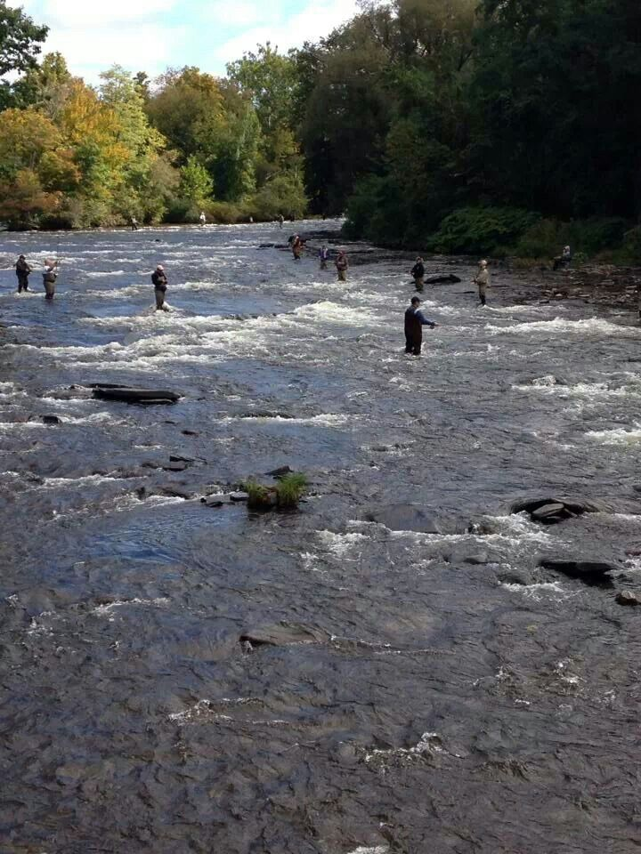 Salmon river pulaski ny fish life pinterest for Salmon fishing in ny