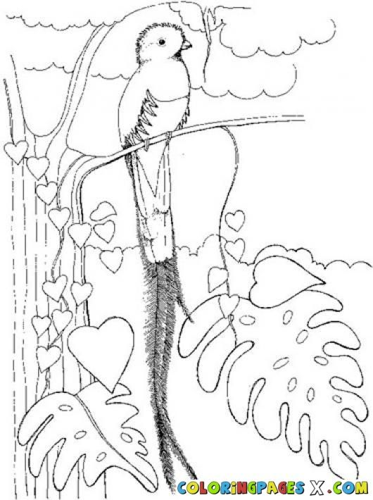 umbrella bird coloring page